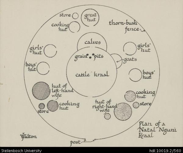 Plan Of A Natal Nguni Kraal